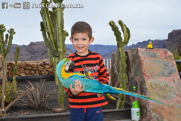 Your Gran Canaria Tour Experience 02-min